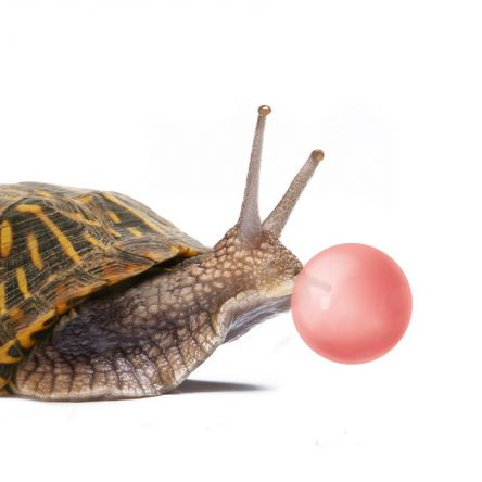 Kornipuž puše balon