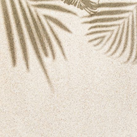 Palma na pijesku