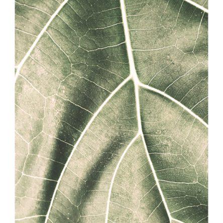 Zeleni list